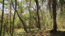 Lots and Land for Sale in Tarcoles, Puntarenas $52,000