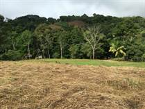 Lots and Land for Sale in San Isidro de El General, San José $100,000