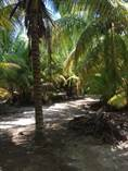 Lots and Land for Sale in Telchac Puerto, Yucatan $27,000