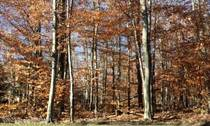 Lots and Land for Sale in Pocono Pines, Pennsylvania $59,900