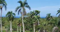 Homes for Sale in Sosua, Puerto Plata $135,000