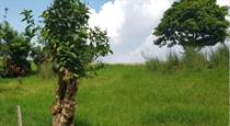Farms and Acreages for Sale in Bgy. Tolentino, Tagaytay, Cavite $2,541,056
