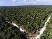 Lots and Land for Sale in Chemuyil, Quintana Roo $59,400