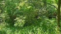 Lots and Land for Sale in Orangeville Township, Michigan $23,000