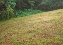Lots and Land for Sale in Bo. Carrizales, Hatillo, Puerto Rico $15,000