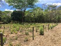 Homes for Sale in Playa Potrero, Guanacaste $100,000
