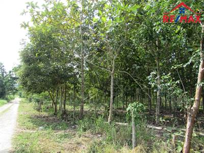 BELIZE 32.6 ACRE TEAK and MAHOGANY INVESTMENT TREE FARM