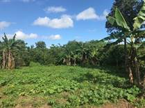Lots and Land for Sale in Bavaro, La Altagracia $1,100,000