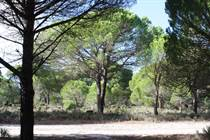 Farms and Acreages for Sale in Comporta, Grândola, Setubal €1,700,000