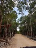 Lots and Land for Sale in Carretera Tulum Coba, Tulum, Quintana Roo $89,000