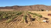 Farms and Acreages for Sale in Ensenada, Baja California $972,000