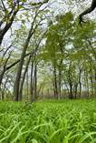 Lots and Land for Sale in Pelee Island, Ontario $249,900
