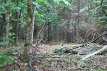 Lots and Land Sold in Lavant Station, Lanark, Ontario $44,900