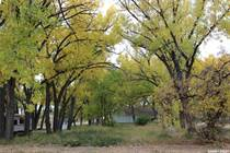 Lots and Land for Sale in Saskatchewan, Val Marie, Saskatchewan $20,000
