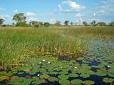 Lots and Land for Sale in Maun, Ngamiland P450,000
