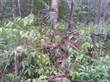 Lots and Land for Sale in Maskall Area , Belize $40,000
