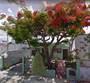 Homes for Sale in Centro, Merida, Yucatan $1,995,000