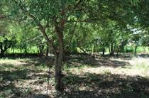 Lots and Land for Sale in Los Arboles, Bucerias, Nayarit $149,000
