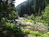 Lots and Land for Sale in Albreda, Valemount, British Columbia $349,000