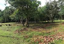 Homes for Sale in Cortez, Puntarenas $52,000