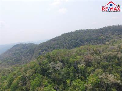 91 ACRES OF FERTILE, JUNGLE LAND with LARGE CAVE - INCOME POTENTIAL