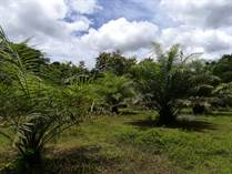 Farms and Acreages for Sale in Parrita, La Pita, Puntarenas $1,000,000