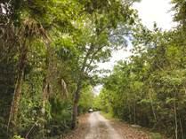 Lots and Land for Sale in Ruta de los Cenotes, Puerto Morelos, Quintana Roo $80,000