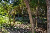 Lots and Land for Sale in Tulum, Quintana Roo $69,000
