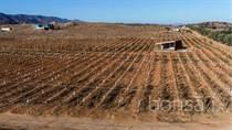 Homes for Sale in valle guadalupe, ENSENADA, Baja California $1,500,000