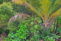 Homes for Sale in Village, Caye Caulker, Belize $140,000