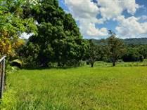 Lots and Land for Sale in BO. VOLADORA MOCA, Moca, Puerto Rico $55,000