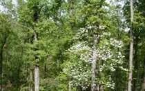 Lots and Land for Sale in Clinton, Arkansas $104,900
