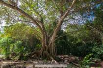 Lots and Land for Sale in Tulum, Quintana Roo $64,000