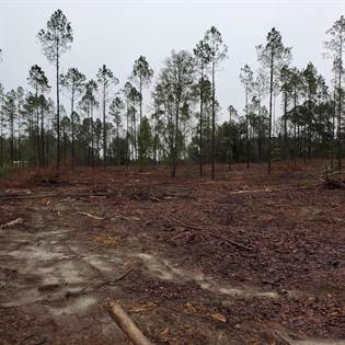 Lots And Land for sale in 00 133rd Rd, Live Oak, FL, 32060