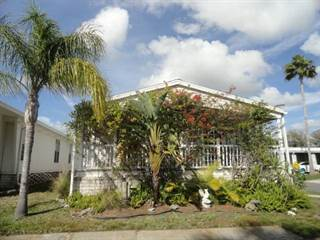 Other Real Estate for sale in 3113 S.R. 580, 183, Clearwater, FL, 34695