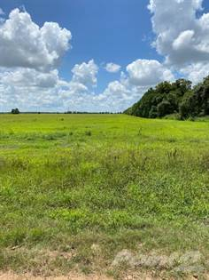 Farm And Agriculture for sale in CR 434 Danevang TX, 77432, El Campo, TX, 77437