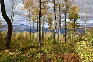 Land for sale in 779 Bear Creek Lane, Waterbury, VT, 05677