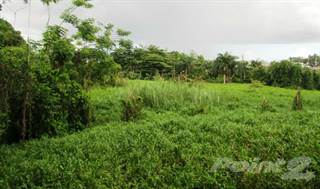 Farm And Agriculture for sale in Buena Vista Ward, Bayamon, PR, 00957