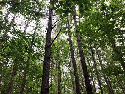 Lots And Land for sale in Co Rd 224, Union, MS, 39365
