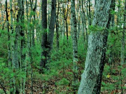 Lots And Land for sale in Parcel F Kenwood Parcel F, Roscommon, MI, 48653