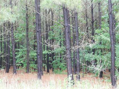 Lots And Land for sale in Tbd GROUNDHOG, Big Sandy, TX, 75755