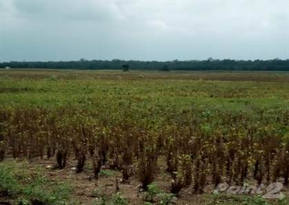 Lots And Land for sale in $1,500 Per Acre, 250 Total Acres, Orange Walk District, Honey Camp Farm Land Investment, Orange Walk, Orange Walk