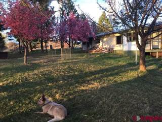 Single Family for sale in 25631 Road T, Dolores, CO, 81323