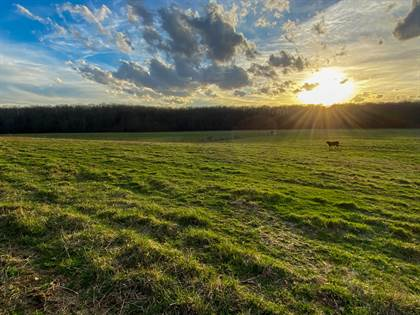 Farm And Agriculture for sale in 1788 County Road 1870, Willow Springs, MO, 65793