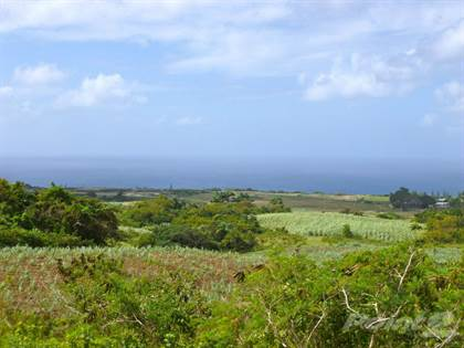 Lots And Land for sale in St.Peter, Speightstown, St. Peter