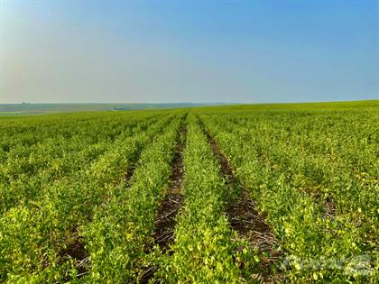 Farm And Agriculture for sale in Unvoas Farm, RM of Swift Current No 137, Saskatchewan