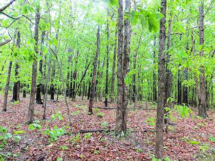 Lots And Land for sale in 000 Hwy 17, West Plains, MO, 65775