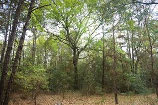 Lots And Land for sale in 28900 Mustang Drive, Plantersville, TX, 77363