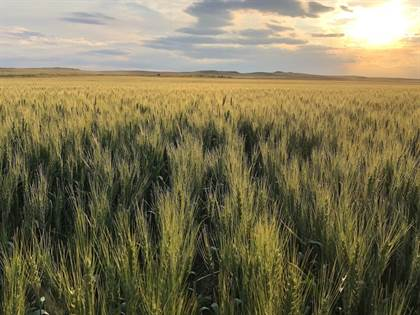 Farm And Agriculture for sale in 134 East Little Dry Road, Cohagen, MT, 59322
