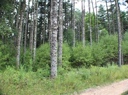 Lots And Land for sale in Beaver Creek Retreat Road, Marlinton, WV, 24954